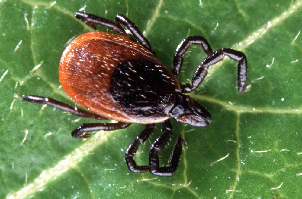 5 steps to protecting yourself from tick-borne illnesses